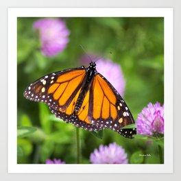 Monarch Butterfly II Art Print