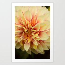 Sanguine - Happy Flower photograph - Modern Dahlia Botanical Art - Floral Art Print
