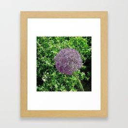 JC FloralArt 02 Framed Art Print