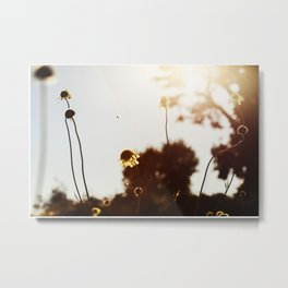 Looking Into The Sun Metal Print