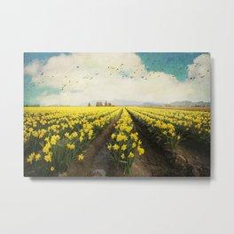 fields of daffodils Metal Print