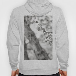 Woods Secrets. Mistery Into The Deep Forest Hoody