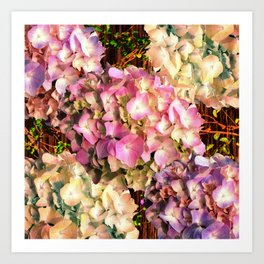 Hydrangea Sunlight Art Print