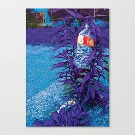 Next pure lie Canvas Print
