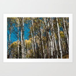 Autumn Aspen Forest Art Print