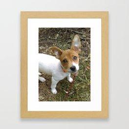 Lil Pup Framed Art Print