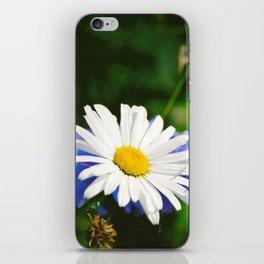 White Daisy Flower Loves Me Loves Me Not iPhone Skin