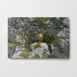 Coastal Rocks With Lichens and Ferns Metal Print