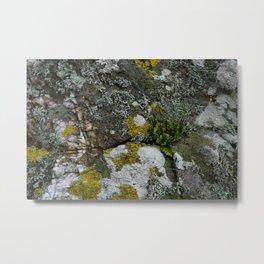 Coastal Rocks With Lichens and Ferns Metal Print