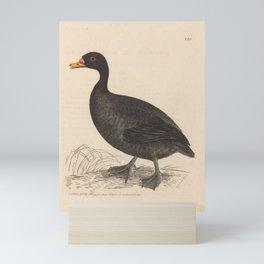 Scoter, anas nigra15 Mini Art Print