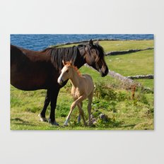 Horses In Landscape Canvas Print