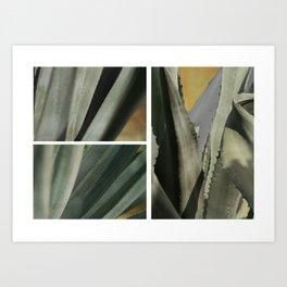 Agave ~ Triptych Art Print