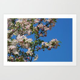 Apple tree blooming in the spring Art Print