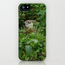 Groggy Groundhog iPhone Case