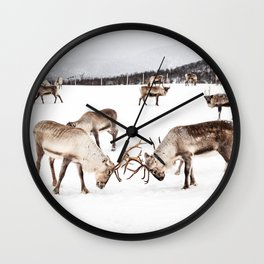Playing Reindeers In Snow In Tromsø | North Of Norway Photo | Travel Photography Art Print Wall Clock