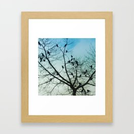 blackbirds Framed Art Print