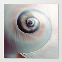 seashell Canvas Prints featuring Seashell by elle moss