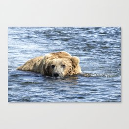 Brown Bear Cooling Off Canvas Print