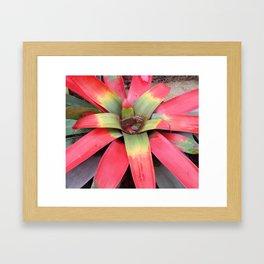 Guzmania Sanguinea Framed Art Print