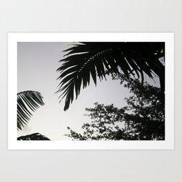 Florida Palms Art Print