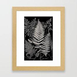 Botanical Ferns Framed Art Print