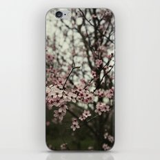 Pink spring blossom iPhone & iPod Skin
