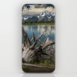 Tree Stump on the Northern Shore of Jackson Lake at Grand Teton National Park iPhone Skin