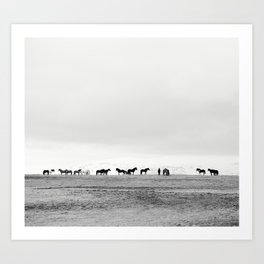 Black and White Horses in Landscape Photograph, Iceland Kunstdrucke