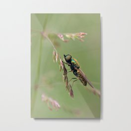 Green Soldier Fly Metal Print