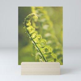 AFE Fern Mini Art Print