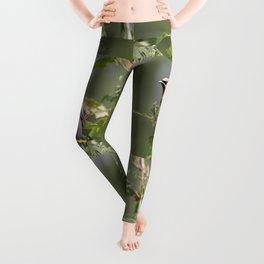 Cedar Waxwing Leggings
