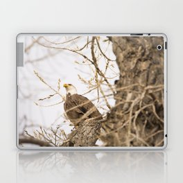 Bald Eagle Perched in Tree Laptop & iPad Skin