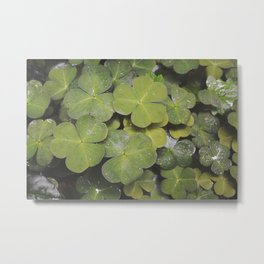 Clover Love Metal Print