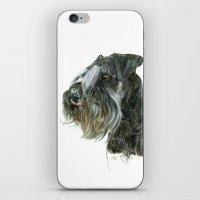 schnauzer iPhone & iPod Skins featuring Schnauzer by Anne Hviid Nicolaisen