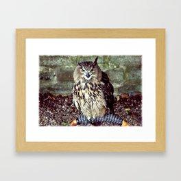 Happy Owl. Framed Art Print