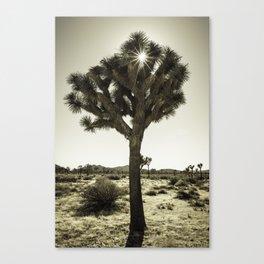 Joshua Tree Shine Canvas Print