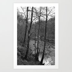 Trees on a Riverbank Art Print
