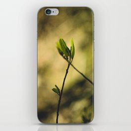 Spring at Nesmith Point iPhone Skin