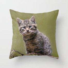 Scottish Wildcat Kitten Throw Pillow