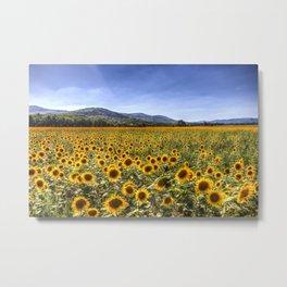 Sunflower Summer Field Metal Print