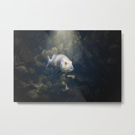 A Fish Metal Print