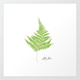 Lady Fern Illustration Botanical Print Art Print