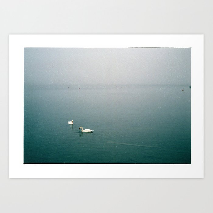 Swans in a misty harbour Art Print
