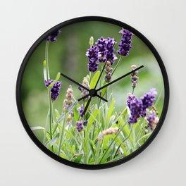 Lavender flower in tin pot Wall Clock