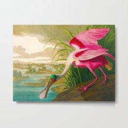 Roseate Spoonbill Bird pink Metal Print