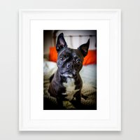 frenchie Framed Art Prints featuring FRENCHIE by Pitter Patterns