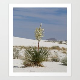 White Sands Soap Yucca Art Print