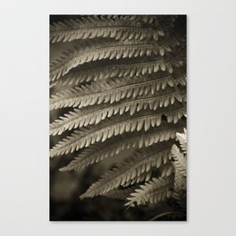 Copper-ized Ferns Fight for Sunshine Canvas Print