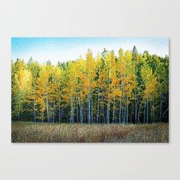 White Birch Forest, Autumn landscape painting by Jeanpaul Ferro Canvas Print