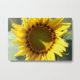 Sunflower in Bloom Metal Print